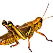 Grasshopper I Poster