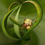 Grasshopper Twist Poster