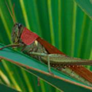 Grasshopper On Palm Leaf Poster