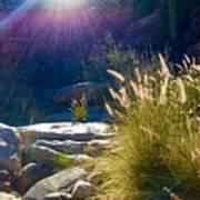 Grassy Sun Rays Poster