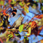 Gray Catbird Framed By Fall Poster