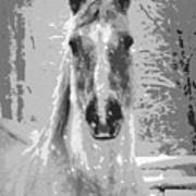 Gray Horse Poster