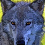 Gray Wolf Portrait Poster