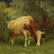 Grazing Cow Poster