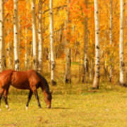 Grazing Horse In The Autumn Pasture Poster