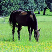 Grazing Horse In The Flowers Poster