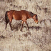 Grazing In The Winter Grass Poster
