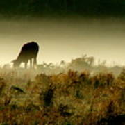Grazing On A Misty Morning Poster by Kimberly Camacho