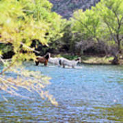 Grazing Salt River Horses Poster