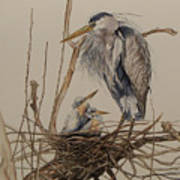 Great Blue Heron And Chicks Poster