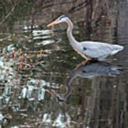 Great Blue Heron And Reflection IIi Poster