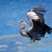 Great Blue Heron  Poster by Betty LaRue