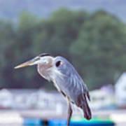 Great Blue Heron On Keuka Lake Horizontal Pano Poster