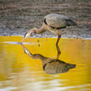 Great Blue Heron On Yellow Poster