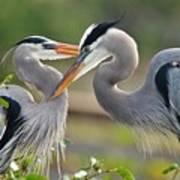 Great Blue Heron Pair 3 Poster