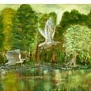 Great Blue Herons Poster