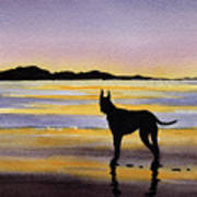 Great Dane At Sunset Poster