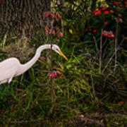 Great Egret In The Garden Poster