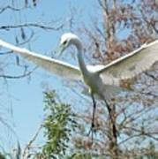 Great Egret Over The Treetops Poster