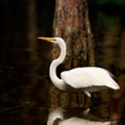 Great Egret Reflection Poster