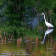 Great Egret Summer Pond Poster