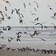 Great Gull Group On The Beach Poster