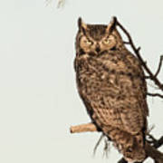 Great Horned Owl At Dusk Poster