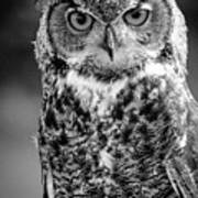 Great Horned Owl Bw IIi Poster