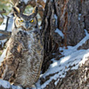 Great Horned Owl On Snowy Branch Poster