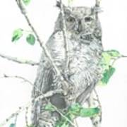 Great Horned Owl Perched In A Tree Poster
