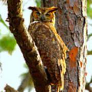 Great Horned Owl Wink Poster