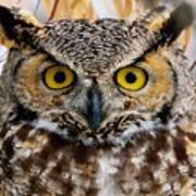 Great Horned Stare Poster