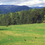 Great Smoky Mountains Deer Grazing In Field Poster