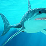 Great White Shark With Sunrays Poster