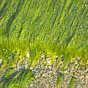 Green Algae On Rock Poster