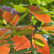 Green And Orange Leaves Poster