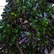 Green-black Cucculent Plant. Big Bush Poster