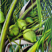 Green Coconuts- 03 Poster