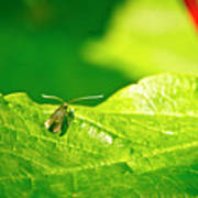 Green Creature On A Broad Leaf. Poster