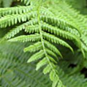 Green Fern 2 Poster