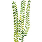 Green Fern Watercolor Minimalist Painting Poster