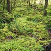 Green Foliage On The Forest Floor Poster