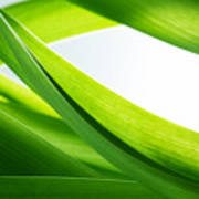 Green Grass Background Poster