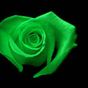 Green Heart-shaped Rose Poster by Glennis Siverson