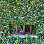 Green Ivy Window  Poster