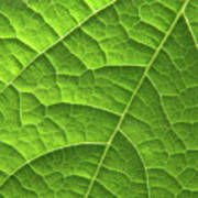 Green Leaf Structure Poster