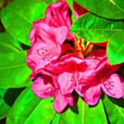 Green Leafs Of Pink Poster
