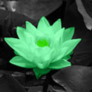 Green Lily Blossom Poster