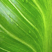 Green Living Poster