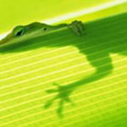 Green Lizard Poster